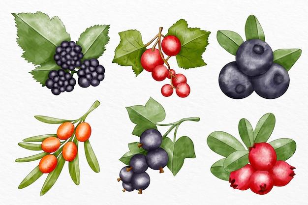 Raccolta di diversi frutti illustrati