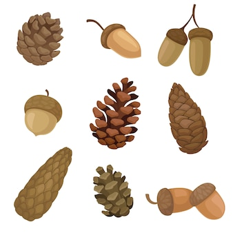 Collection of different images of acorns and fir cones.