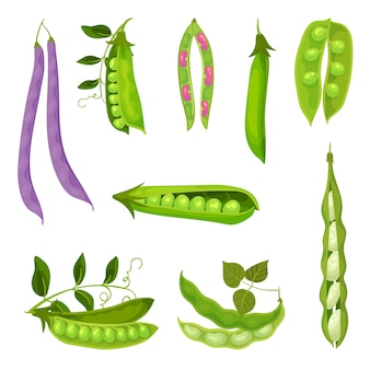 Collection of different images of pea pods and beans.  illustration on white background.
