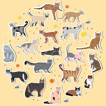 Collection different kitten layout cover