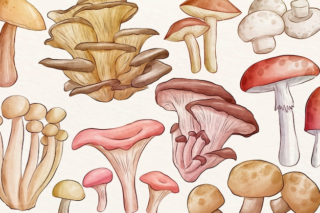 Collection of different mushrooms background