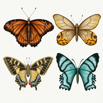 Collection of different watercolor butterflies