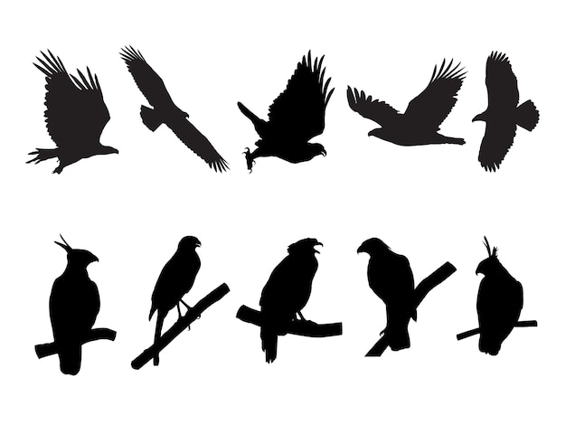 Collection of eagle, hawk bird on tree branch silhouettes.