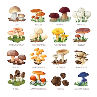 Collection of edible mushrooms and toadstools