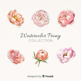 Collection of elegant peony flowers in watercolor style