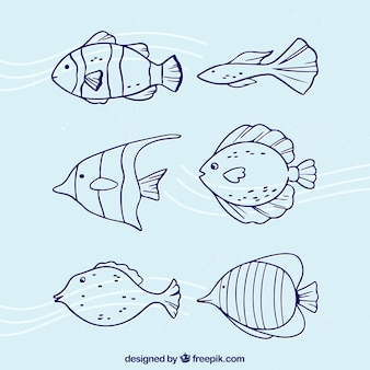 Raccolta di pesci in stile doodle