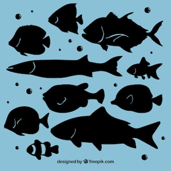 Collezione di sagome di pesce