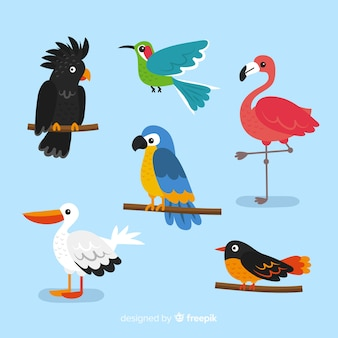 Collection of flat exotic bird
