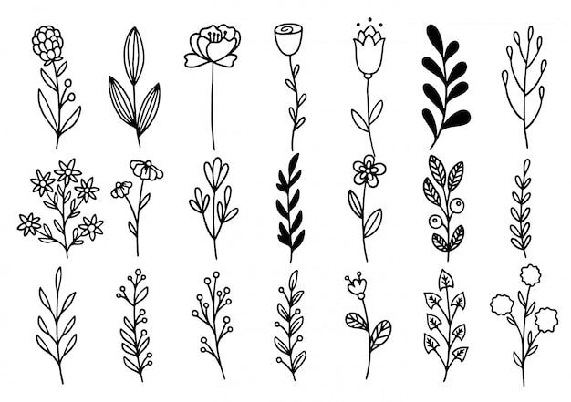 コレクションフォレストシダユーカリアートフォーリッジナチュラル葉ハーブをラインスタイルで。デザイン手描き花の装飾的な美しさエレガントなイラスト