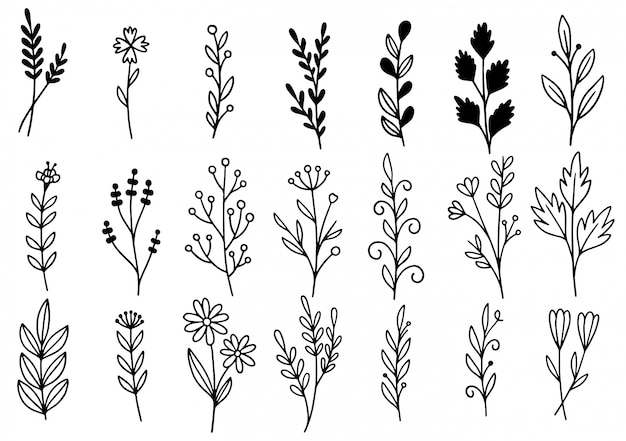 コレクションフォレストシダユーカリアートフォーリッジ自然葉ハーブラインスタイルで。デザイン手描き花の装飾的な美しさエレガントなイラスト