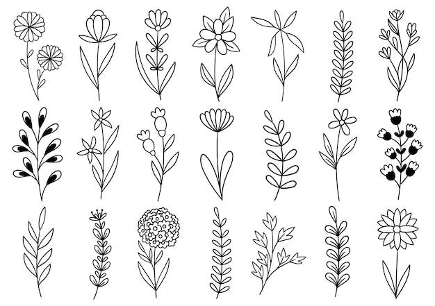 컬렉션 숲 고사리 유칼립투스 예술 단풍 자연 선 스타일의 허브를 떠난다. 디자인 손으로 그린 꽃 장식 아름다움 우아한 그림