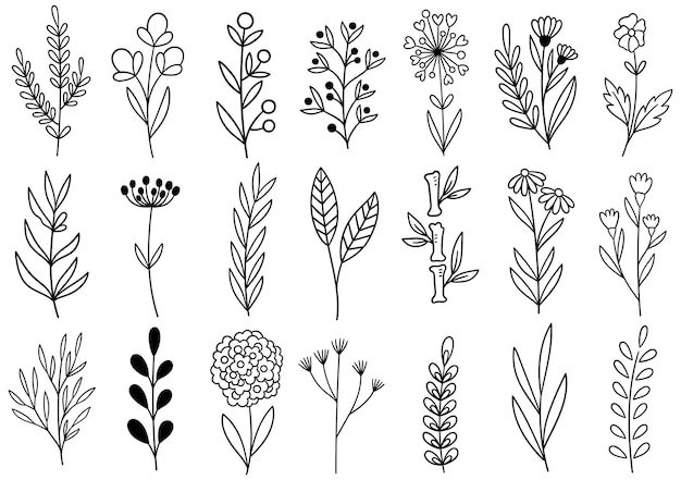 Коллекция лесных папоротников эвкалипта арт листва натуральных листьев трав в стиле линии. декоративная красота элегантная иллюстрация для дизайна рисованной цветок
