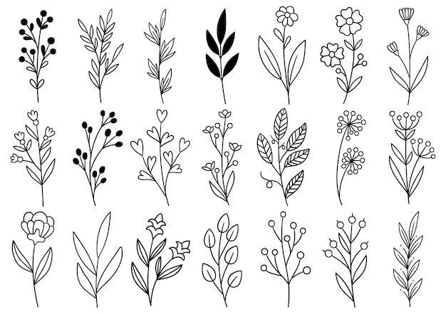 コレクション森のシダユーカリアートの葉自然の葉のハーブをラインスタイルで。デザイン手描き花の装飾的な美しさエレガントなイラスト