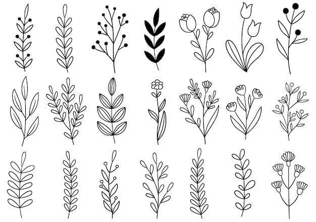컬렉션 포레스트 펀 유칼립투스 예술 단풍 자연은 선 스타일로 허브를 남깁니다. 디자인 손으로 그린 꽃 장식 아름다움 우아한 그림
