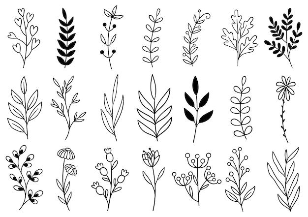 コレクション森のシダユーカリアートの葉自然の葉ハーブをラインスタイルで。手描きの花