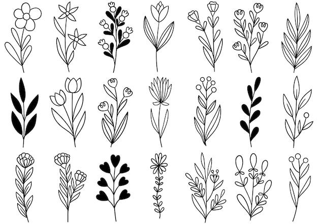 Коллекция лесных папоротников эвкалипта арт листва натуральных листьев трав в стиле линии. рисованный цветок