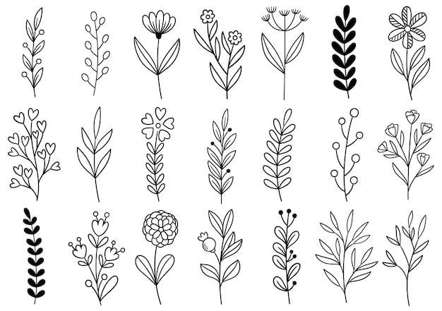 コレクション森のシダユーカリアートの葉自然の葉のハーブをラインスタイルで。手描きの花