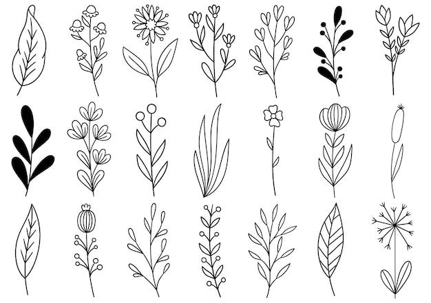 컬렉션 숲 고사리 유칼립투스 예술 단풍 자연 잎 허브 선 스타일