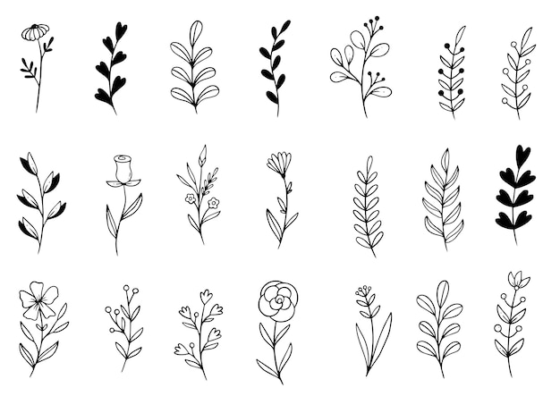 Collection forest fern eucalyptus art foliage natural leaves herbs in line style.