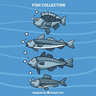 Collection of four fish