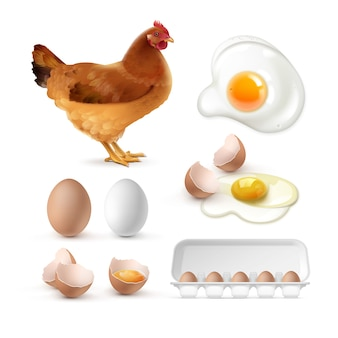 Collection of fried, cracked and whole eggs