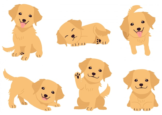 The collection of golden retriever in many actions