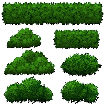 Collection of green bushes of various shapes