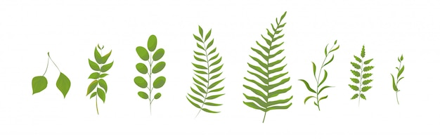 Collection of green forest fern. leaves