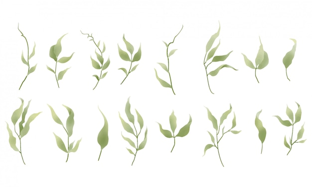 Collection of green leaf plants watercolor style