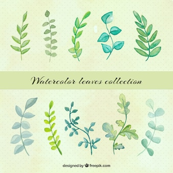 Collection of green leaves painted with watercolor