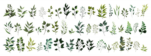 Collection of greenery leaf plant forest herbs tropical leaves spring flora in watercolor style.