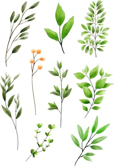 Collection of greenery style watercolor