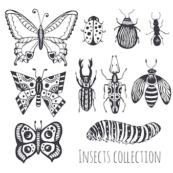 Collection of hand drawind insects,  cute set of decoration for design, icons, logo or print. vector illustration.