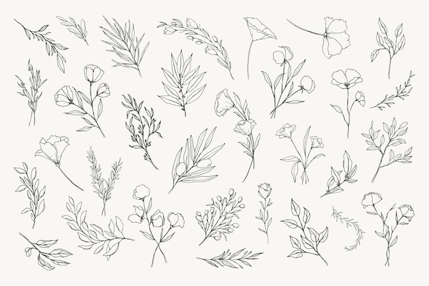 Collection of hand-drawn botanical and floral illustration