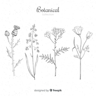 Collection of hand drawn botanical and herb spices