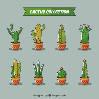 Collection of hand drawn cacti