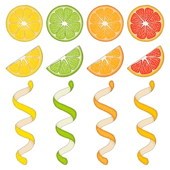 Collection of hand drawn elements, lemon, grapefruit, orange, lime, slice and spiral. objects for packaging, advertisements. isolated image.