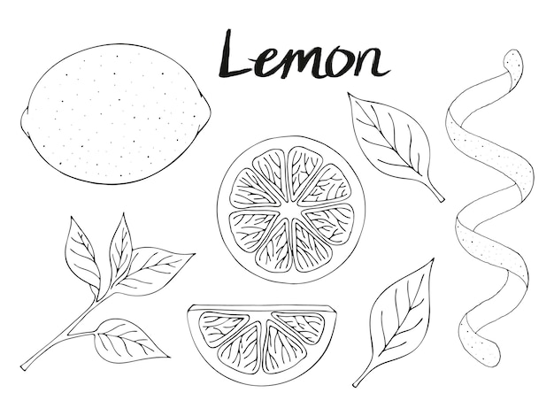 Collection of hand drawn elements, lemon, leaves and slice. objects for packaging, advertisements. isolated image.