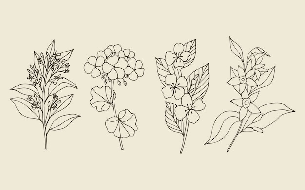Collection of hand drawn essential oil plants