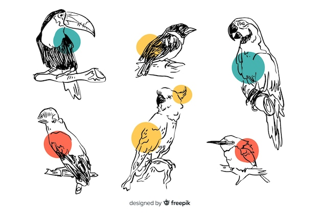 Collection of hand drawn exotic bird