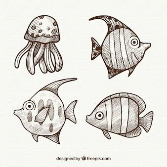 Collezione di pesci disegnati a mano