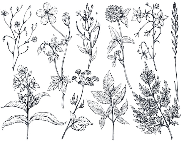 Collection of hand drawn flowers and herbs