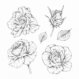 Collection of hand drawn flowers and leaves