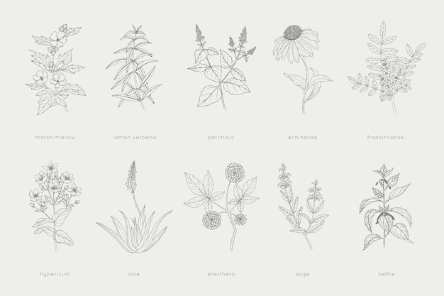 Collection of hand-drawn herbal remedies