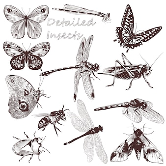 Collection of hand-drawn insects