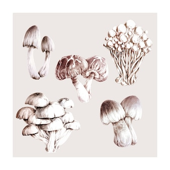 Collection of hand drawn mushrooms