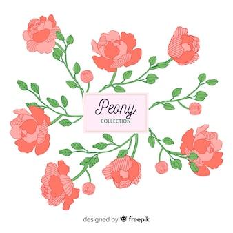 Raccolta di fiori di peonia disegnati a mano