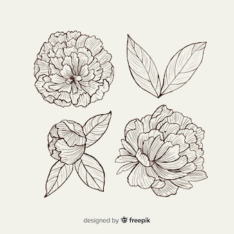 Collection of hand drawn peony flowers