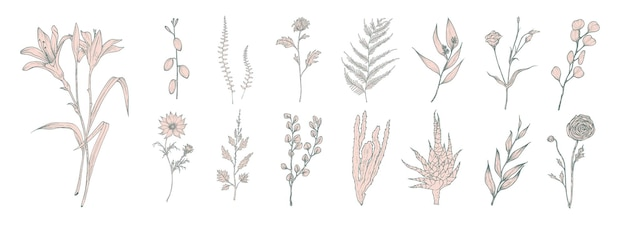 Collection of hand drawn pink flowers, ferns and succulent isolated on white background. bundle of botanical drawings of elegant wild plants, floral decorations.