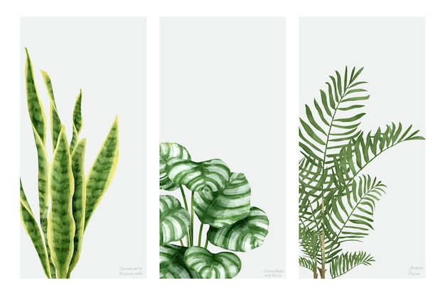 Palm Leaf Vectors Photos And Psd Files Free Download